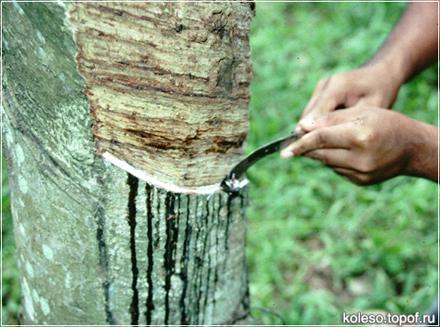 Производство натурального каучука новости Topof Ru